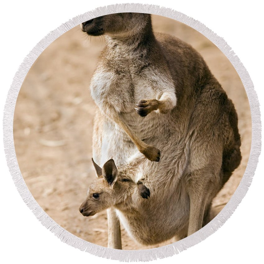 Kangaroo Round Beach Towel featuring the photograph In Mother's Care by Mike Dawson