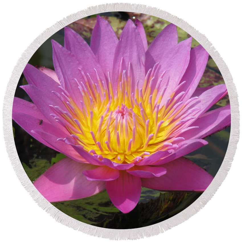 Lotus Round Beach Towel featuring the photograph In Position by Amanda Barcon