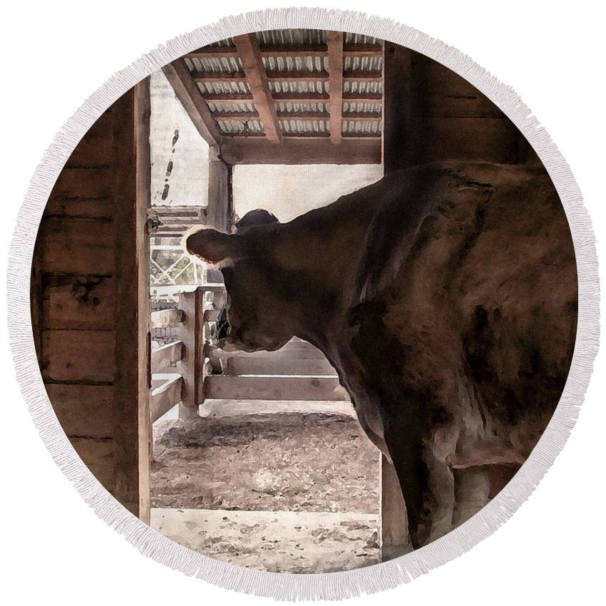 Animal Round Beach Towel featuring the photograph In The Barn by Todd Blanchard