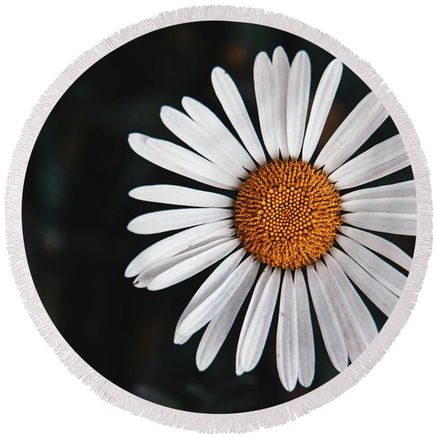 Flower Round Beach Towel featuring the photograph In The Dark by Madison Speer