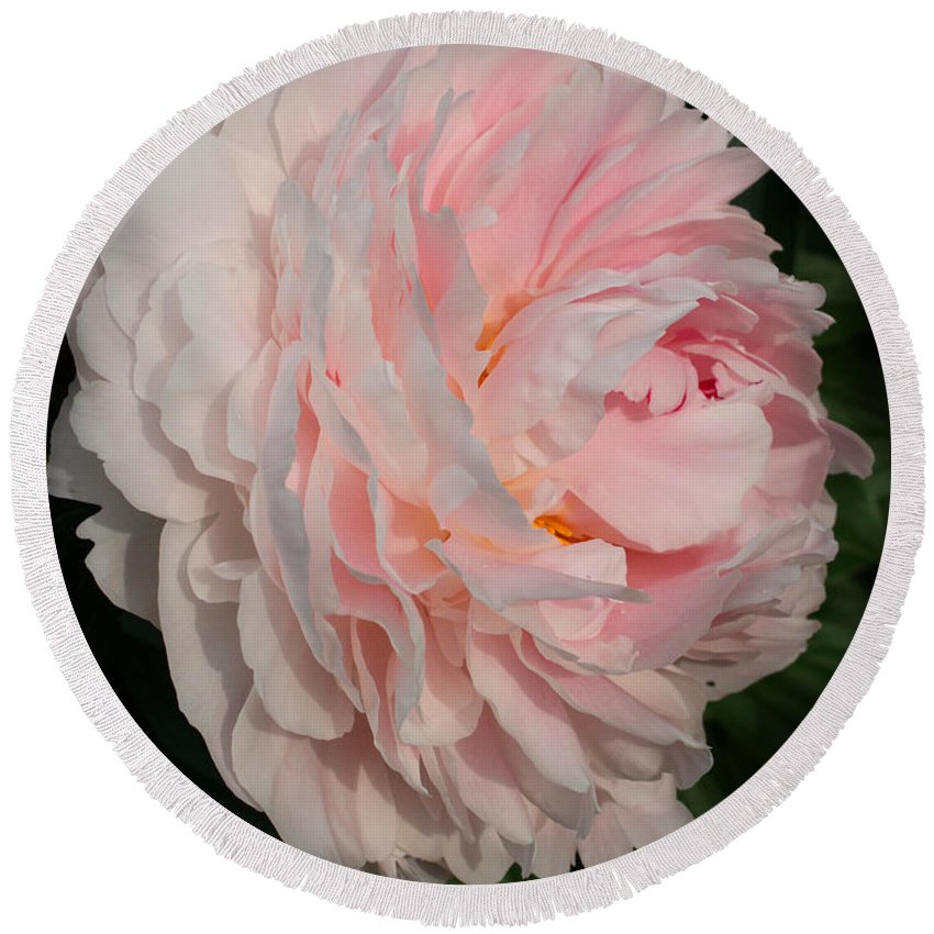 Peony Round Beach Towel featuring the photograph In The Evening Sun by Jutta Maria Pusl