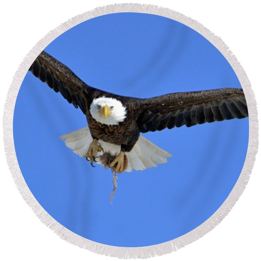 Eagle Round Beach Towel featuring the photograph In The Eye Of The Beholder by Tracie Fernandez