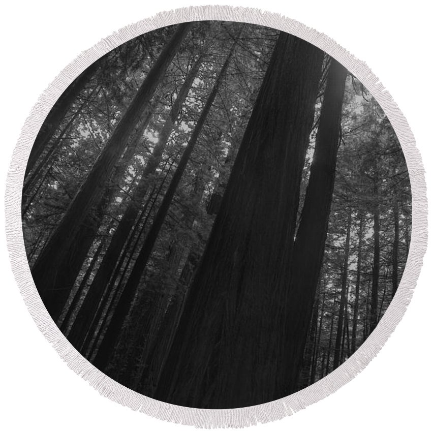 Nature Round Beach Towel featuring the photograph In The Forest by John K Sampson