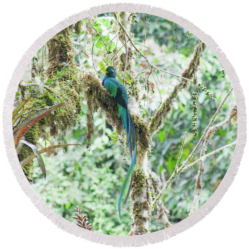 Resplendent Quetzal Round Beach Towel featuring the photograph In The Moss by Wes Hanson
