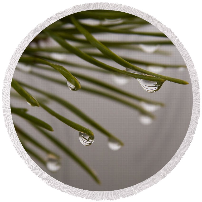 Pine Tree Needle Drop Droplet Reflection Rain Green Fog Foggy Nature Outdoors Hike Round Beach Towel featuring the photograph In The Rain by Andrei Shliakhau