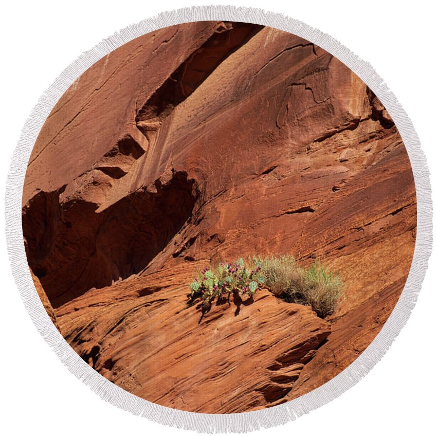 Arizona Round Beach Towel featuring the photograph In The Rock Life Will Come by Lucinda Walter