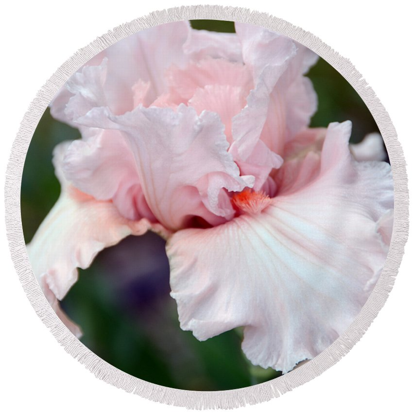 Iris Round Beach Towel featuring the photograph Incredibly Iris by Angelina Tamez