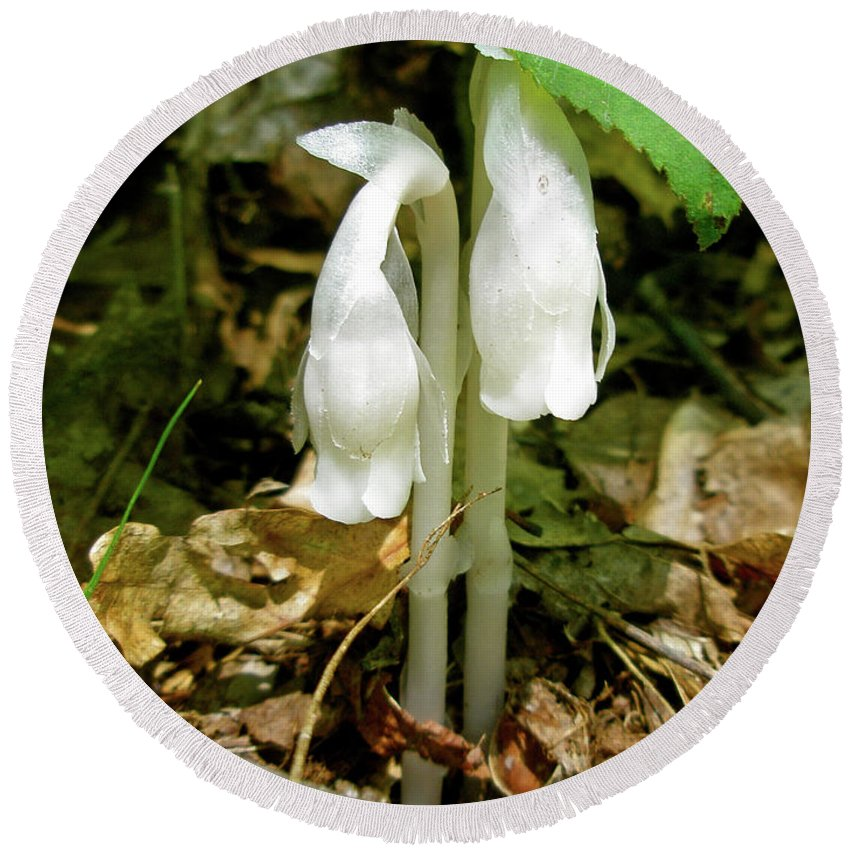 indian Pipes Round Beach Towel featuring the photograph Indian Pipes - Monotropa Uniflora by Mother Nature