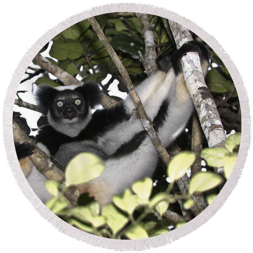 Madagascar Round Beach Towel featuring the photograph Indri Indri by Michele Burgess