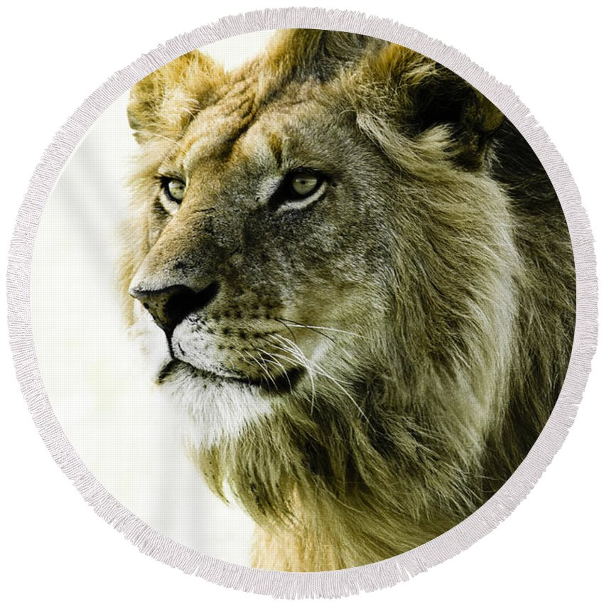 Lion Round Beach Towel featuring the photograph Intensity by Michele Burgess