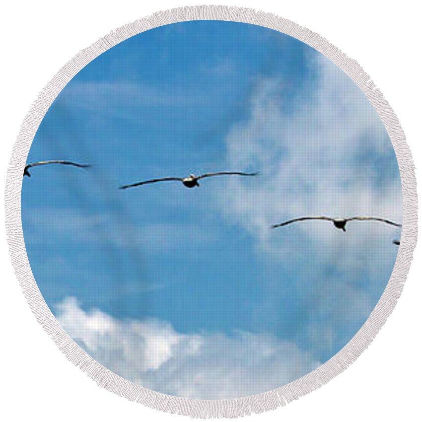 Bird Round Beach Towel featuring the photograph Into The Wind by Ken Frischkorn