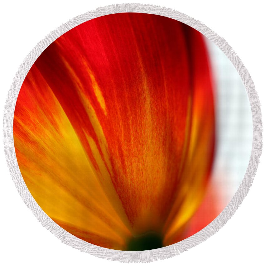 Tulip Round Beach Towel featuring the photograph Introverted by Amanda Barcon
