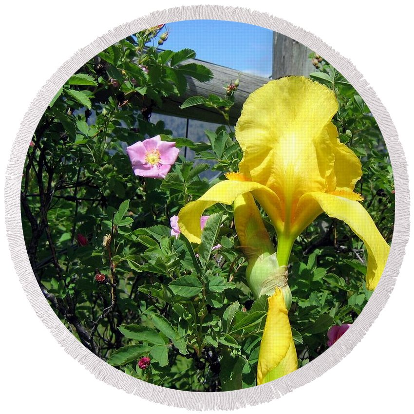 Iris Round Beach Towel featuring the photograph Iris And Wild Roses by Will Borden