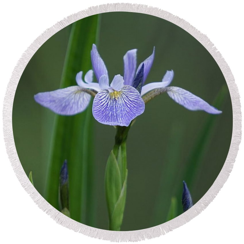 Iris Round Beach Towel featuring the photograph Iris by Beth Deitrick