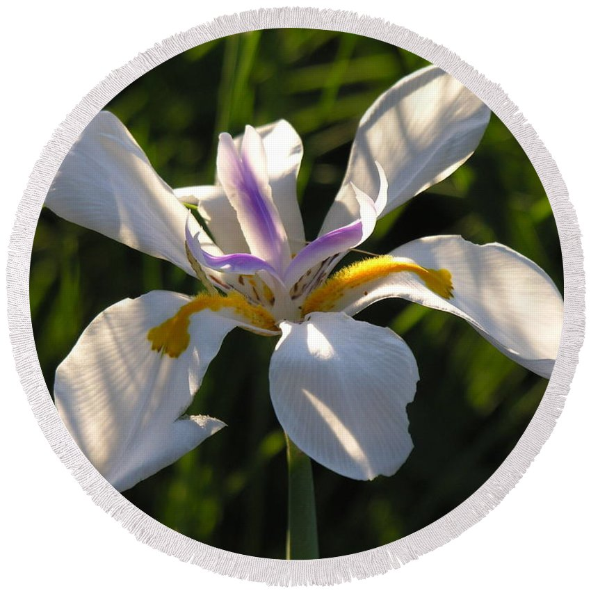 Lilly Round Beach Towel featuring the photograph Iris by Diane Greco-Lesser