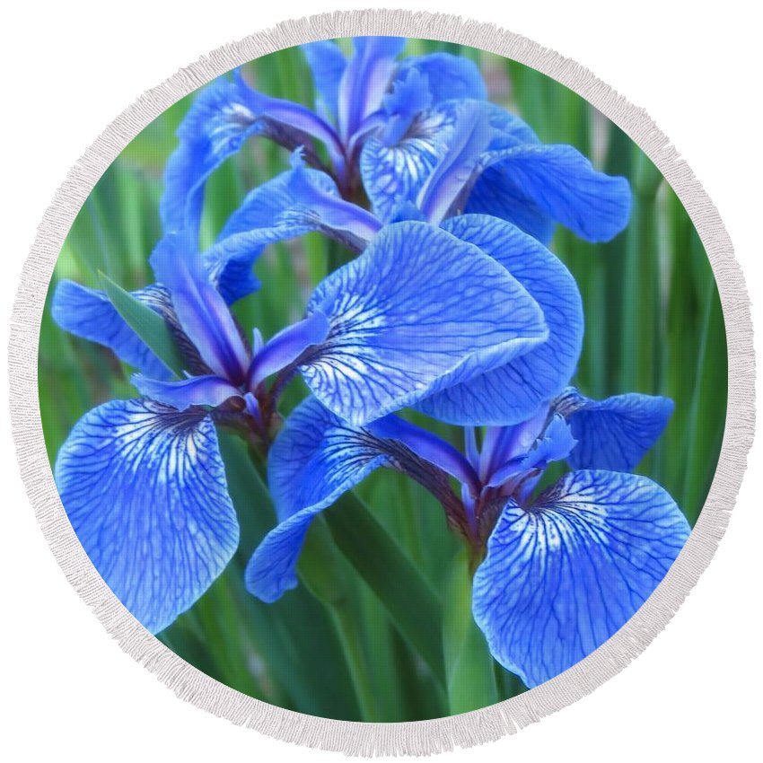 Iris Round Beach Towel featuring the photograph Iris Floral by MTBobbins Photography