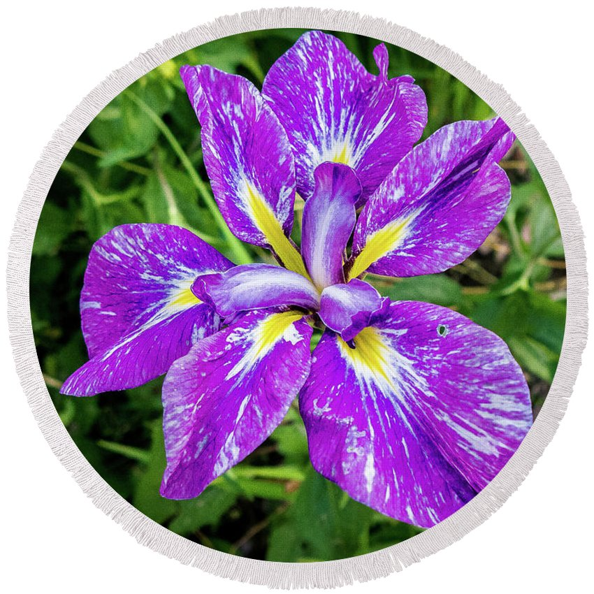 Flowers Round Beach Towel featuring the photograph Iris Flower by Philip McAlary