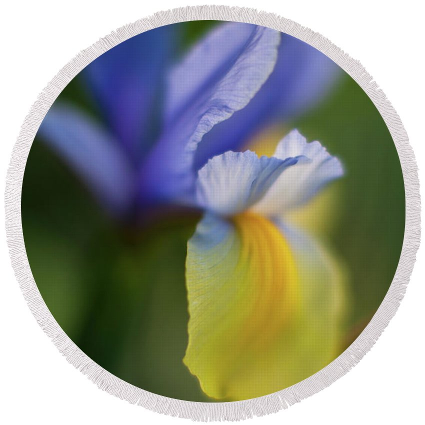 Iris Round Beach Towel featuring the photograph Iris Grace by Mike Reid