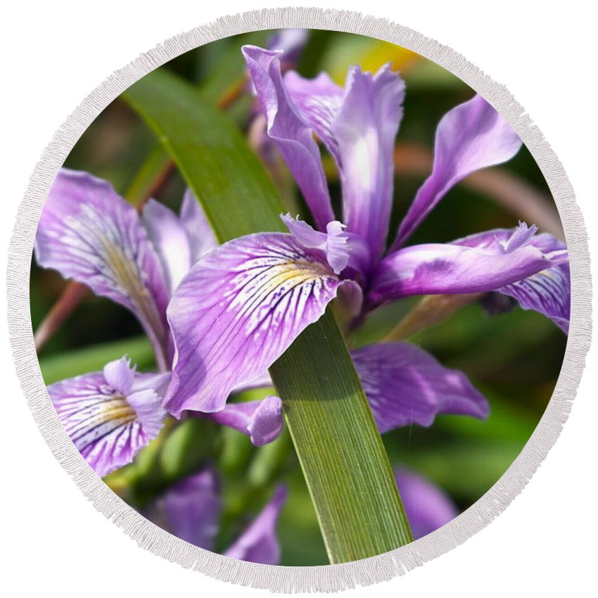 Flower Round Beach Towel featuring the photograph Iris Haiku by Michele Myers