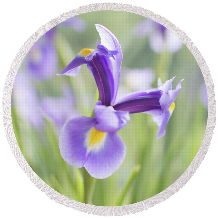 Iris Round Beach Towel featuring the photograph Iris by Rosie Herbert