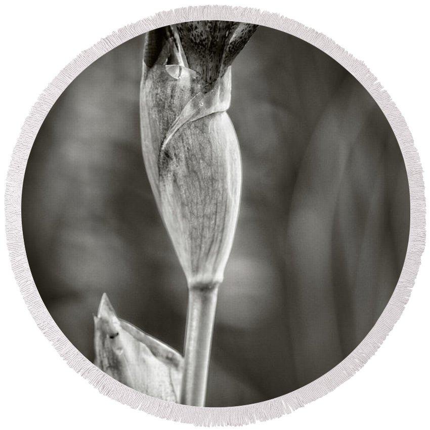 Iris Round Beach Towel featuring the photograph Iris To Be by Rene Gignac