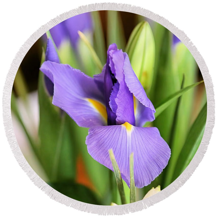 Iris Round Beach Towel featuring the photograph Iris Unfolding II by Theresa Campbell