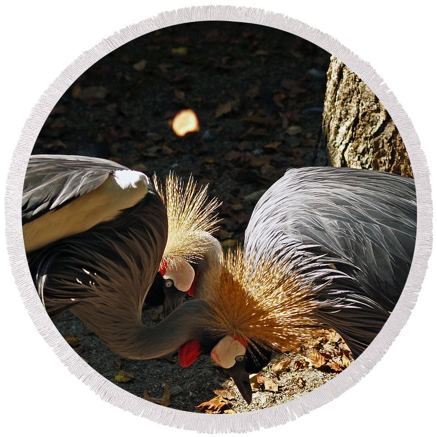 Fine Art Photography Round Beach Towel featuring the photograph Is That A Wig You Are Wearing by Patricia Griffin Brett
