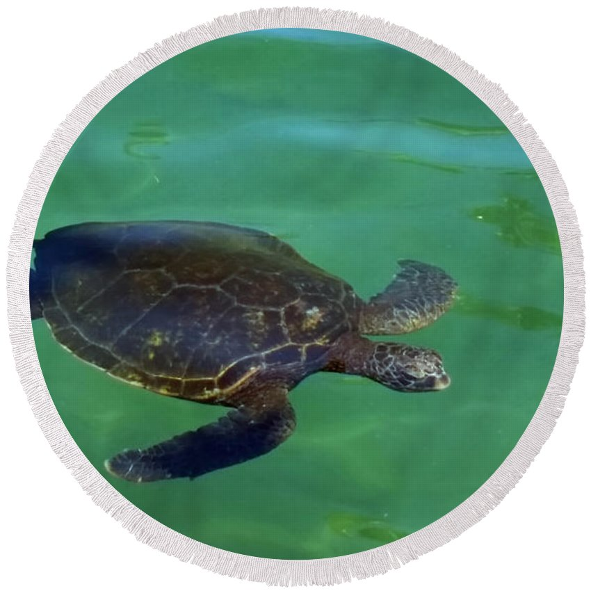 Honu Round Beach Towel featuring the photograph Is That Lunch by Pamela Walton