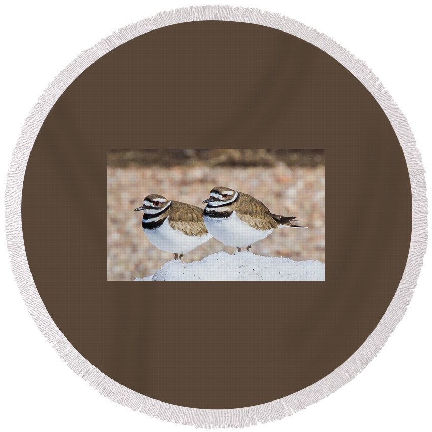 Killdeer Round Beach Towel featuring the photograph It Doesn't Feel Like Spring by Mary Lou Stone