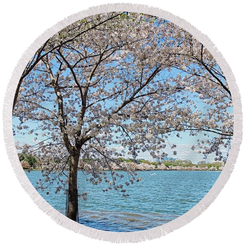 Cherry Tree Round Beach Towel featuring the photograph It Must Be Spring In Washington by Doug Swanson