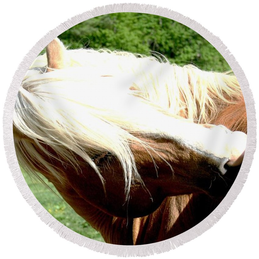 Horse Round Beach Towel featuring the photograph Itchy Spot by Tina Meador