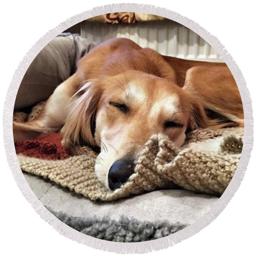 Dogsofinstagram Round Beach Towel featuring the photograph It's Been A Hard Day...  #saluki by John Edwards
