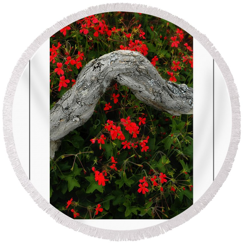 Geranium Round Beach Towel featuring the photograph Ivy Geraniums And Log Poster by Mike Nellums
