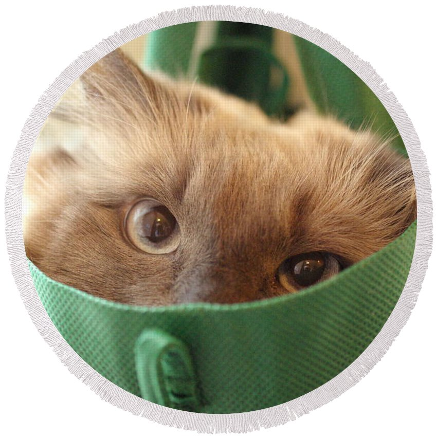 Cat Round Beach Towel featuring the photograph Jack In The Bag by Cindy Johnston