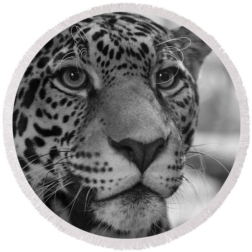 Jaguar Round Beach Towel featuring the photograph Jaguar In Black And White by Sandy Keeton
