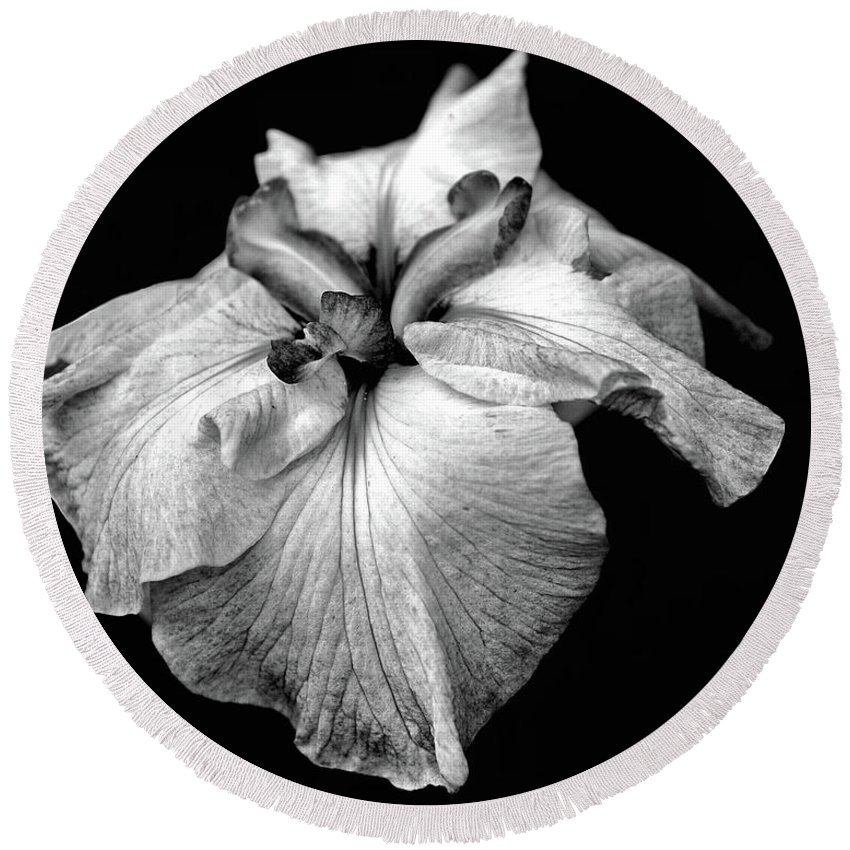 Japanese Iris Round Beach Towel featuring the photograph Japanese Iris In Black And White by Smilin Eyes Treasures