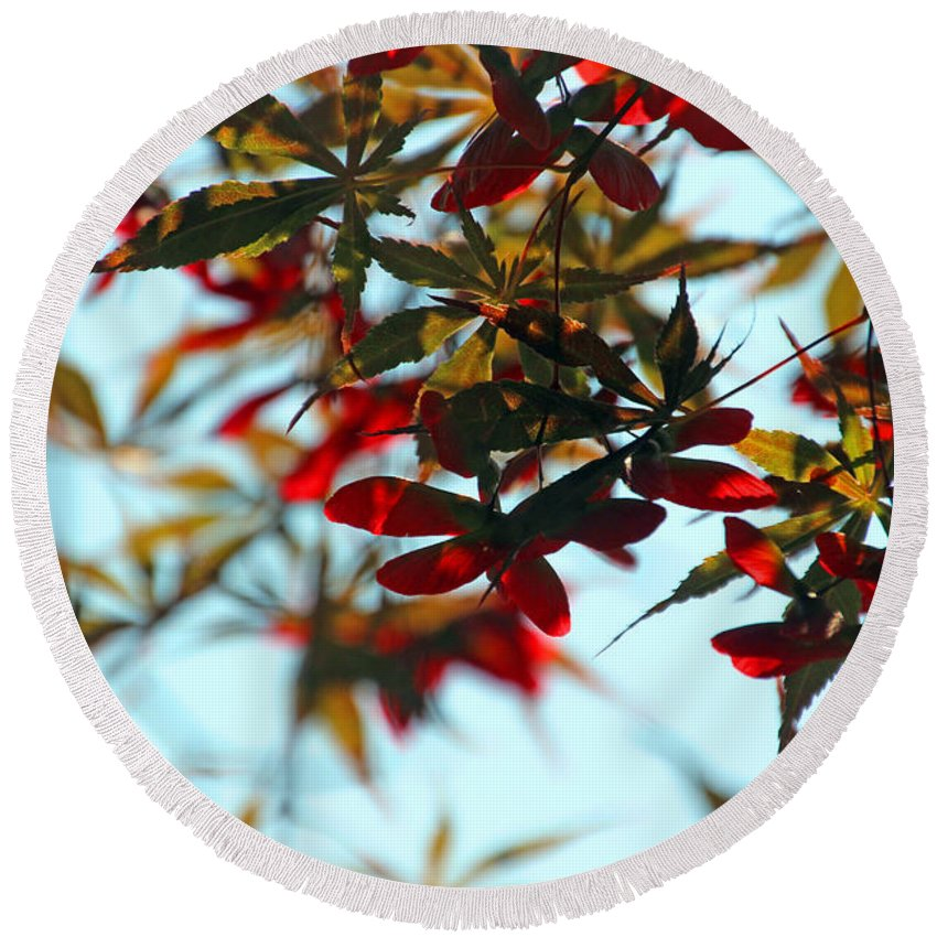 Maple Round Beach Towel featuring the photograph Japanese Maple 1592 by Carolyn Stagger Cokley