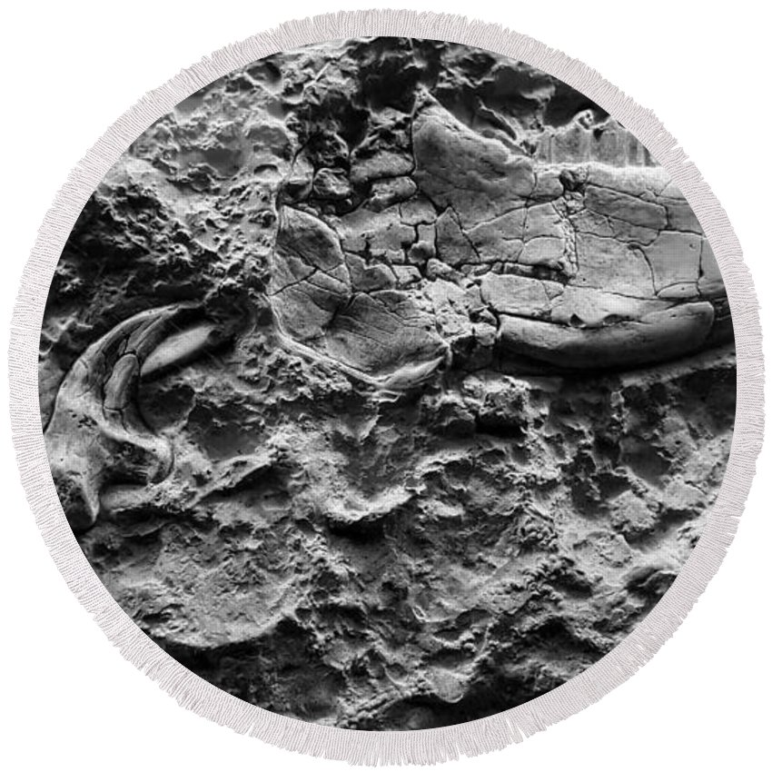 Fossil Round Beach Towel featuring the photograph Jaw Bone B W by Rob Hans