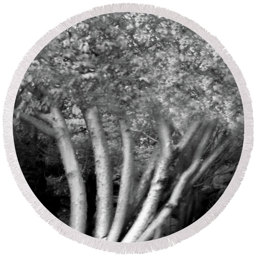 Trees Round Beach Towel featuring the photograph Jelks Fingerling 1 by Gary Bartoloni