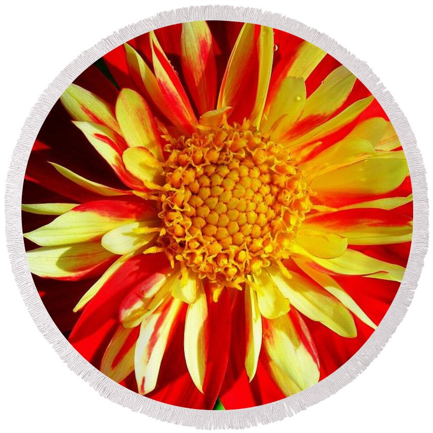 Flower Round Beach Towel featuring the photograph Joyful ... by Juergen Weiss