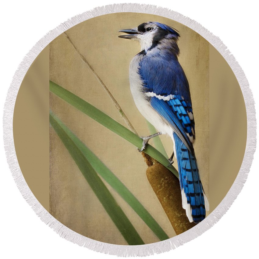 Blue Jay Round Beach Towel featuring the photograph JR by Linda D Lester