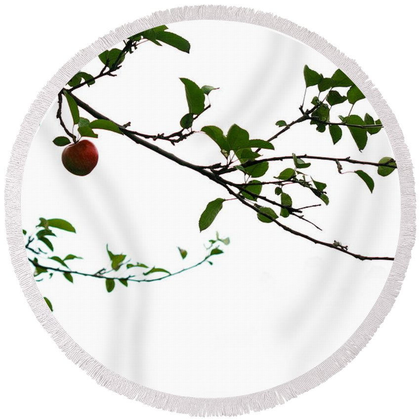 Adam And Eve Round Beach Towel featuring the photograph Juicy  A Tempting Photograph Of A Tasty Ripe Red Apple On A Tree by Angela Rath