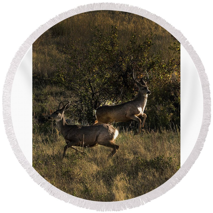 Deer Round Beach Towel featuring the photograph Jumping deer by Roy Nierdieck