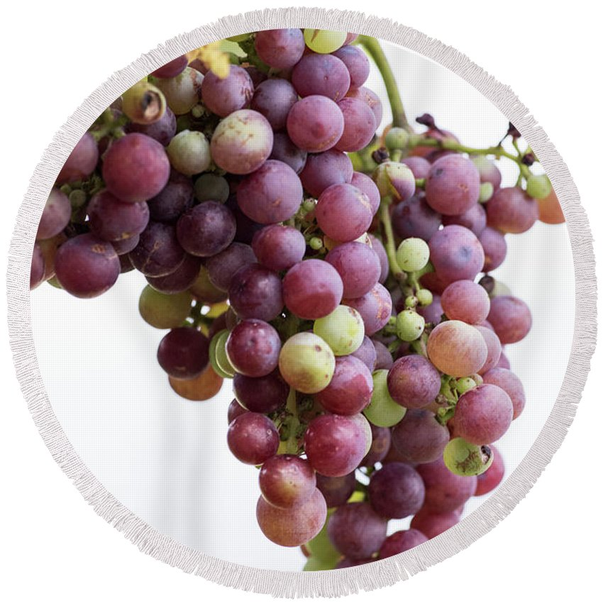 Grapes Round Beach Towel featuring the photograph June Grapes #1 by Kevin McCollum