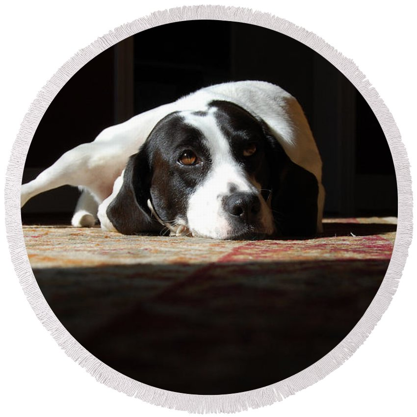Dogs.animal Round Beach Towel featuring the photograph Junebug by Robert Meanor
