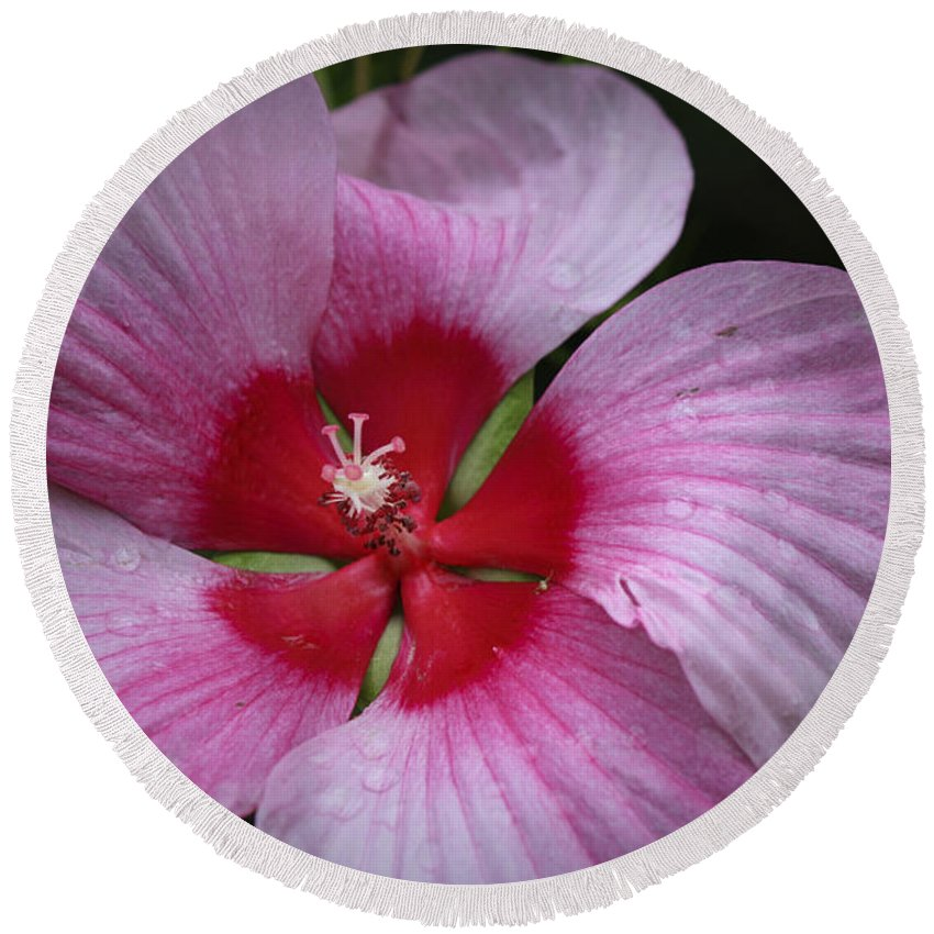Hibiscus Round Beach Towel featuring the photograph Junes Hibiscus 2 by Teresa Mucha