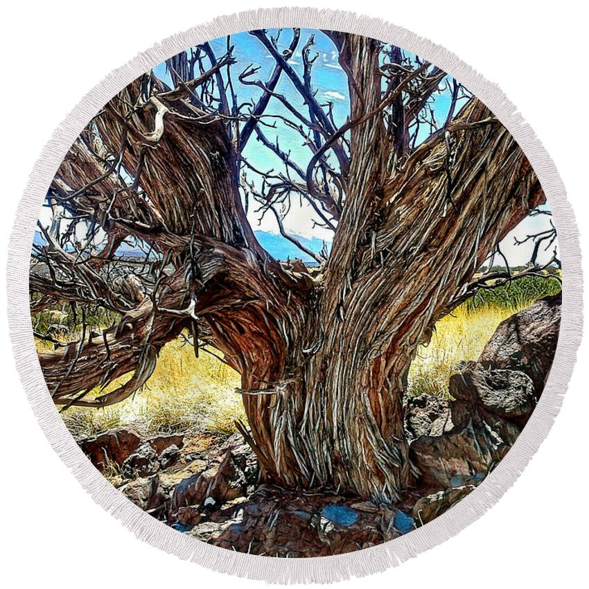 Tree Round Beach Towel featuring the photograph Juniper Monarch by Jim Thomas