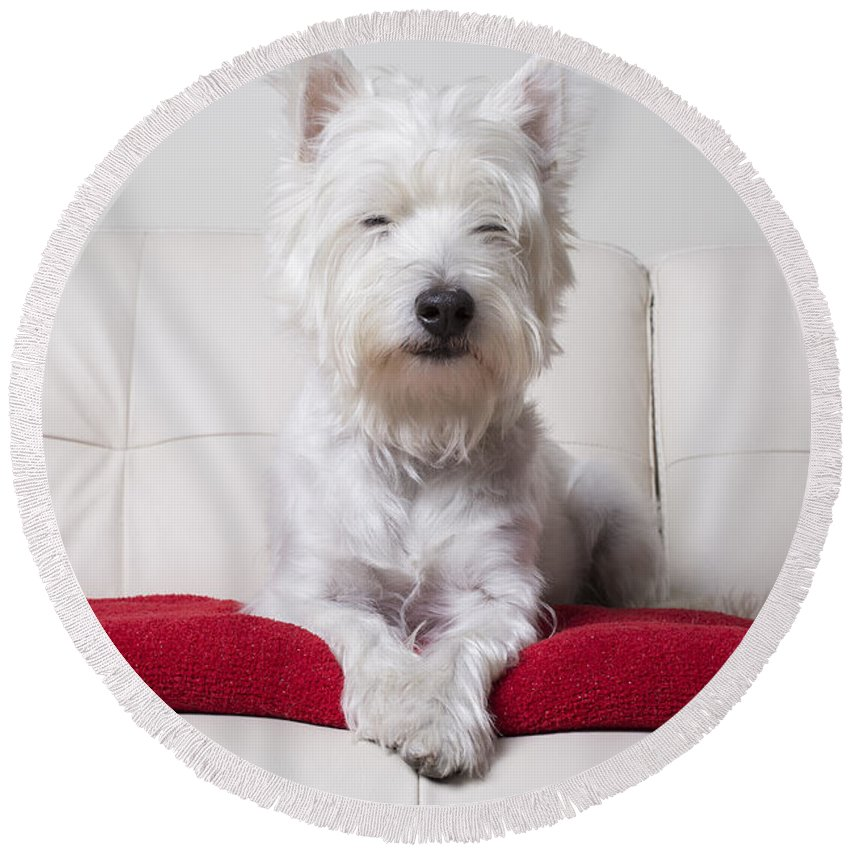 Terrier Round Beach Towel featuring the photograph Just Chilling by Edward Fielding