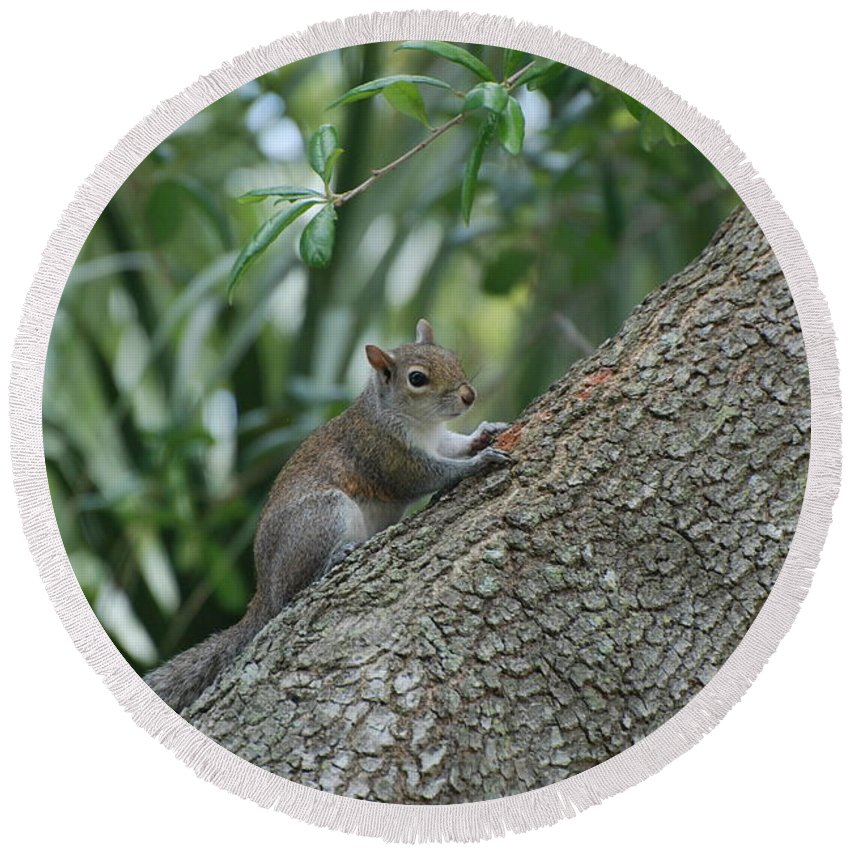 Squirrels Round Beach Towel featuring the photograph Just Chilling Out by Rob Hans