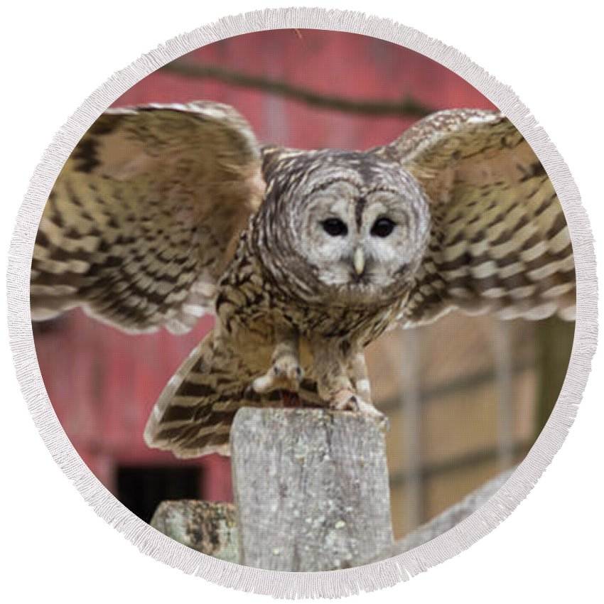 Owl Round Beach Towel featuring the photograph Just Dropping In by ChelleAnne Paradis